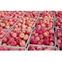 Buy cheap Vitamins such as riboflavin, thiamin, and pyridoxine (vitamin B-6) good in tartaric acid Large Fuji Apple big and delici from wholesalers