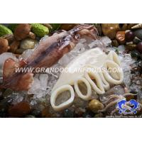 Buy cheap Frozen Squid Rings from wholesalers