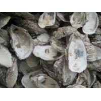 Buy cheap Traditional chinese medicine,Mu Li ke (Concha Ostreae)/Oyster Shell from wholesalers