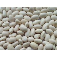 Buy cheap High quality Pure White Kidney Bean Extract Wholesale, Natural White Kidney Bean Extract from wholesalers