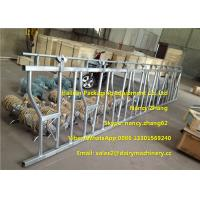 Buy cheap Large Farm Equipment Dairy Cows Cattle Head Lock Locking And Feeding from wholesalers
