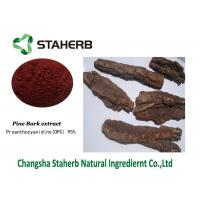 Buy cheap Pine Bark Extract Standard Reference Materials Contain Polyphenols Proanthocyanidins from wholesalers