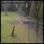Buy cheap deer fence/ deer fence height/deer fence netting/ deer skull mount/ deer barrier/ poly deer fence/electric deer fence from wholesalers