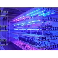 Buy cheap IP68 waterproof Energy saving 60W DC12V 1240* 39* 21mm led grow light from wholesalers