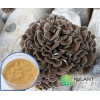 Buy cheap Maitake Mushroom extract 40% Polysaccharides from wholesalers