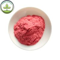 China GMP Factory  Wholesale Maqui Berry Powder on sale