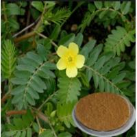 Buy cheap Tribulus Terrestris Extract Saponins 40% 60% 80% 90% from wholesalers