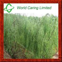 Buy cheap Herbal Ingredient Natural White Willow Bark Extract salicin 10%-98% HPLC product
