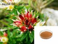 Buy cheap Rhodiola Rosea Plant Extract-bella@organic-herb.com product
