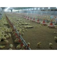 Buy cheap automatic poultry equipment for chicken from wholesalers