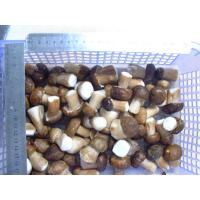 Buy cheap IQF Boletus Edulis whole from wholesalers