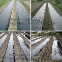 Buy cheap Perforated silver black mulch film for crop production,vegetable garden black / gray perforated mulch layer plastic mulc from wholesalers
