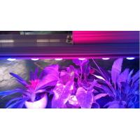 Buy cheap LED Plant Light for Plant Growing with CE RoHS and FCC from wholesalers