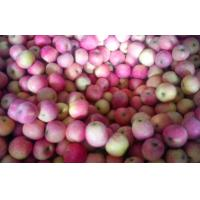 Buy cheap Red Delicious Organic Fuji Apple from wholesalers