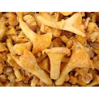 Buy cheap Frozen Cantharellus Cibarius from wholesalers