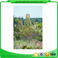 Buy cheap Straight Garden Bamboo Stakes For Thick Bamboo Fencing 40 X 150cm from wholesalers