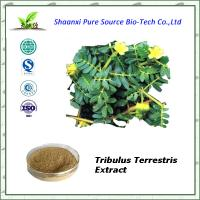 Buy cheap Tribulus terrestris extract 90% saponins, China manufacturer from wholesalers