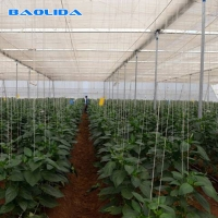 Buy cheap Multispan Agricultural 6 Mil Film Polythene Grow Tunnel from wholesalers