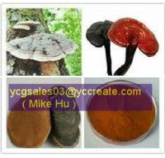 Buy cheap Ganoderma lucidum spore powder from wholesalers
