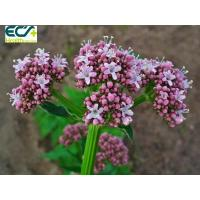 Buy cheap Sedative Valerian Root Herbal Supplement Functional Food Ingredients For Beauty Effect from wholesalers
