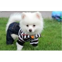Buy cheap spot sales pet clothes,pet apparel, pet clothing,dog clothes ,dog apparel,pet product wholesale from wholesalers