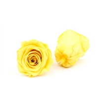 Buy cheap Immortal Diameter 5-6cm Preserved Rose Flower For Mothers Day from wholesalers
