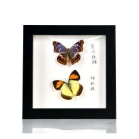 Buy cheap China square solid wood shadow box frame for butterfly marcos 3d molduras para fotos from wholesalers