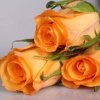 Buy cheap Fresh Cut flowers-Holiday Princess-Orange Rose from wholesalers