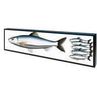 Buy cheap Open Frame Shelf Edge Lcd Display Customized Color 50,000 Hours Panel Life product
