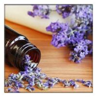 Buy cheap Lavender Oil for Toenail Fungus,lavender Essential Oils for Diffuser, lavender oil for soap making from wholesalers
