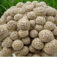Buy cheap Brown Shimeji Mushroom in Retail Pack, Rich in Amino Acid, Low in Calorie and Healthy Food from wholesalers