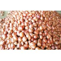 Buy cheap Non-Peeled Fresh Red Asian Shallot Contains Fibre , Anti-Inflammatory from wholesalers