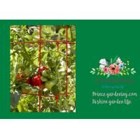 Powder Coated Steel Tomato Plant Stakes / Support For Tomato Plants