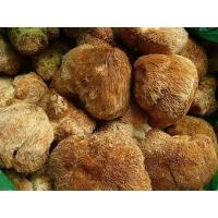 Buy cheap Natural Lions mane mushroom extract,Hericium Extract, Hericium Erinaceus Extract 20%,4:1 from wholesalers