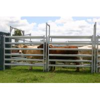 Buy cheap Used Cattle Yards For Sale Cattle Yard Fence Heavy Duty 6 Oval 1.6mm thick 1.8Mx2.1M from wholesalers