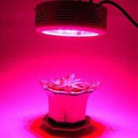 Buy cheap UFO LED Grow Light with 3600lm Lumens, Used for Garden, Warm Room, Greenhouse product