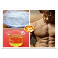 Buy cheap Male Hormone Test Sust 250 Clostebol Acetate Turinabol White Powder / Yellow Oil from wholesalers