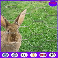 Buy cheap 19 Gauge 36 inch x 100 foot x 2 inch Galvanized Chicken Wire Mesh Dingzhou from wholesalers