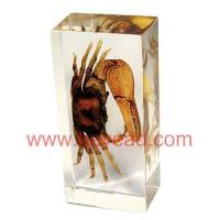 Buy cheap Real Scorpion insect amber Paperweight,resin crafts from wholesalers