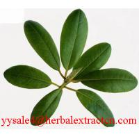 Buy cheap Corosolic acid(Loquat Leaf Extract) from wholesalers