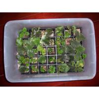 Buy cheap seed propagation trays from wholesalers