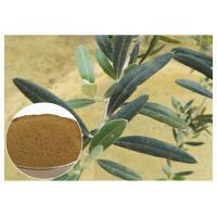 80 Mesh Natural Olive Leaf Extract Powder Food Grade Improving Immune System