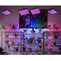 Buy cheap High Power Greenhouse Lighting 300W LED Grow Light from wholesalers
