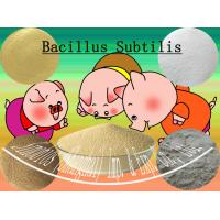 Buy cheap Off white Microecologics Bacillus Subtilis Probiotic Feed Additives SEM-BS20BI from Wholesalers
