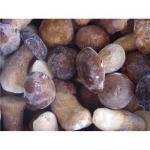 Buy cheap Supply wild mushroom from wholesalers