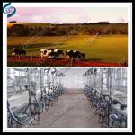 Buy cheap high efficiency cow herringbone milking parlour from wholesalers