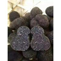 Buy cheap Factory Price Premium Fresh Wild Black Truffle 1-3CM from China from wholesalers