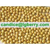 Buy cheap Isolate Soya protein(NON-GMO soybean) from wholesalers