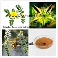 Buy cheap puncturevine weed extract protodioscin China supplier, Cheap wholesale puncture vine extract from wholesalers