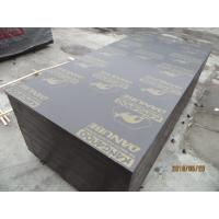 Buy cheap kangaroo film faced plywood with good price for Pakistan,karachi from wholesalers